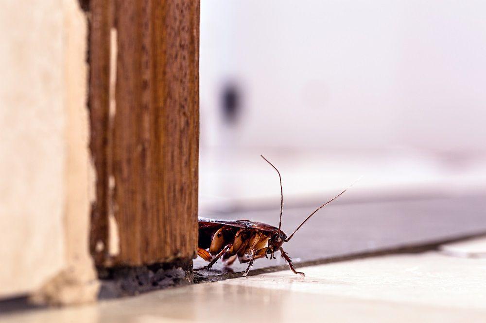 Rentokil Initial: Esto es lo que pasa cuando una cucaracha entra en una casa