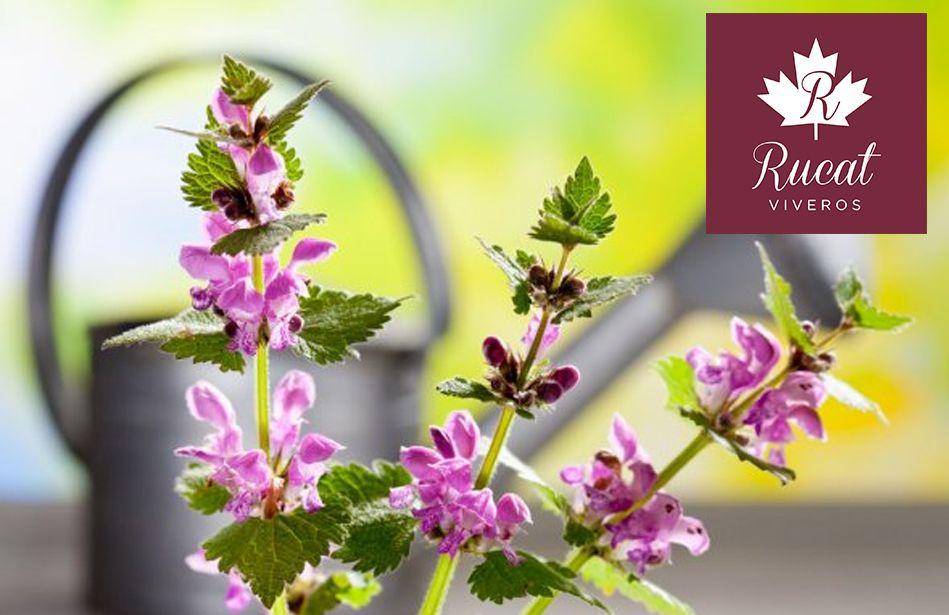 ¿Qué flores plantar esta primavera? por VIVEROS RUCAT