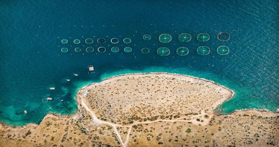 La empresa española AIS Group desarrolla un sistema de IA para el control de algas nocivas
