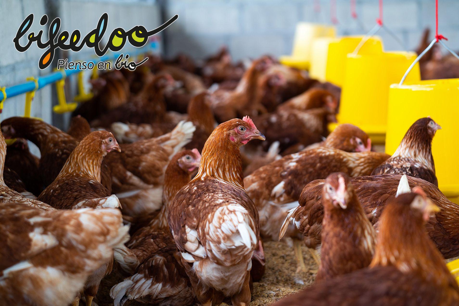 Según Bifeedoo, el pienso ecológico es lo natural para los animales