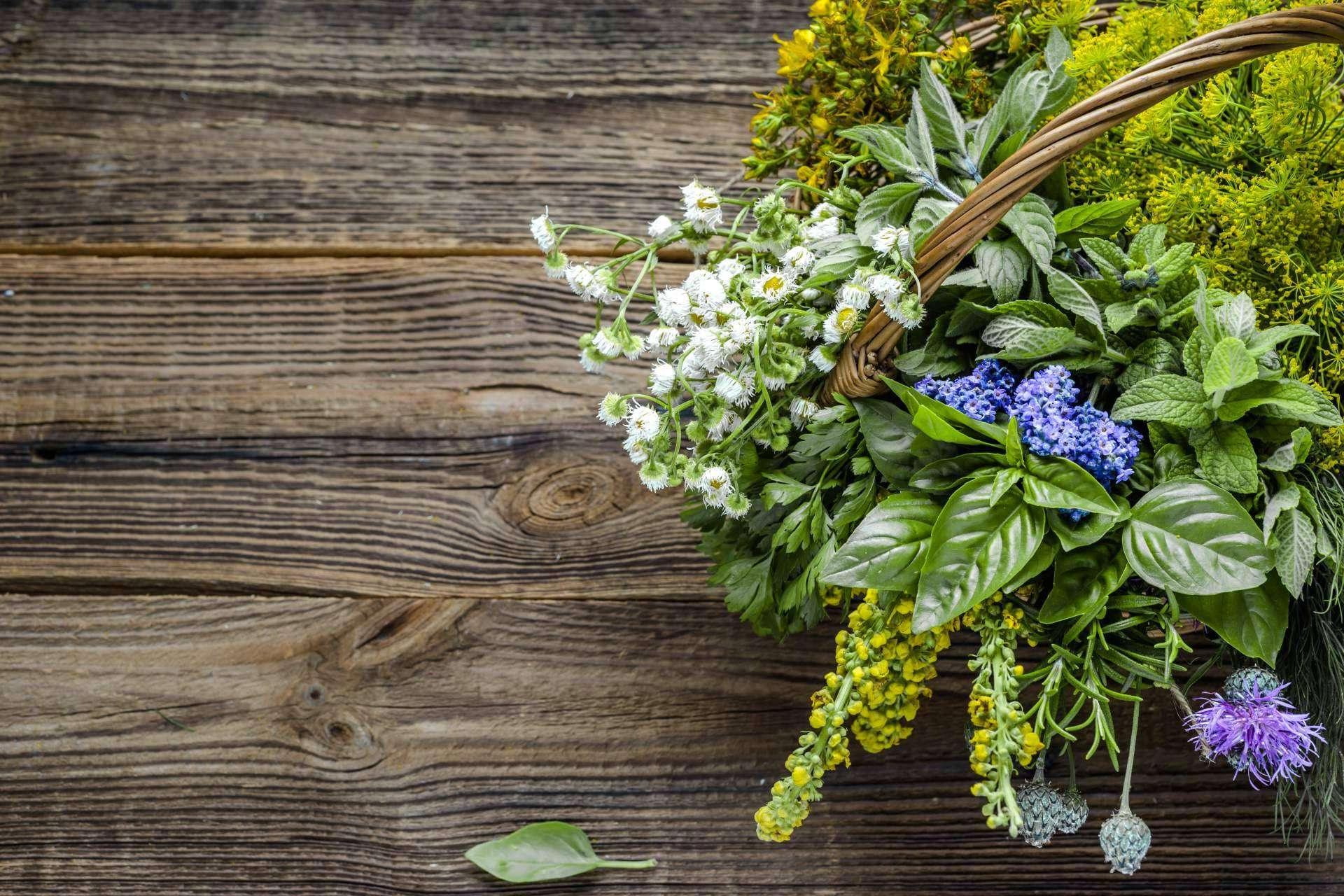 Los beneficios de las plantas aromáticas de calidad ofrecidas por Spirit Natura