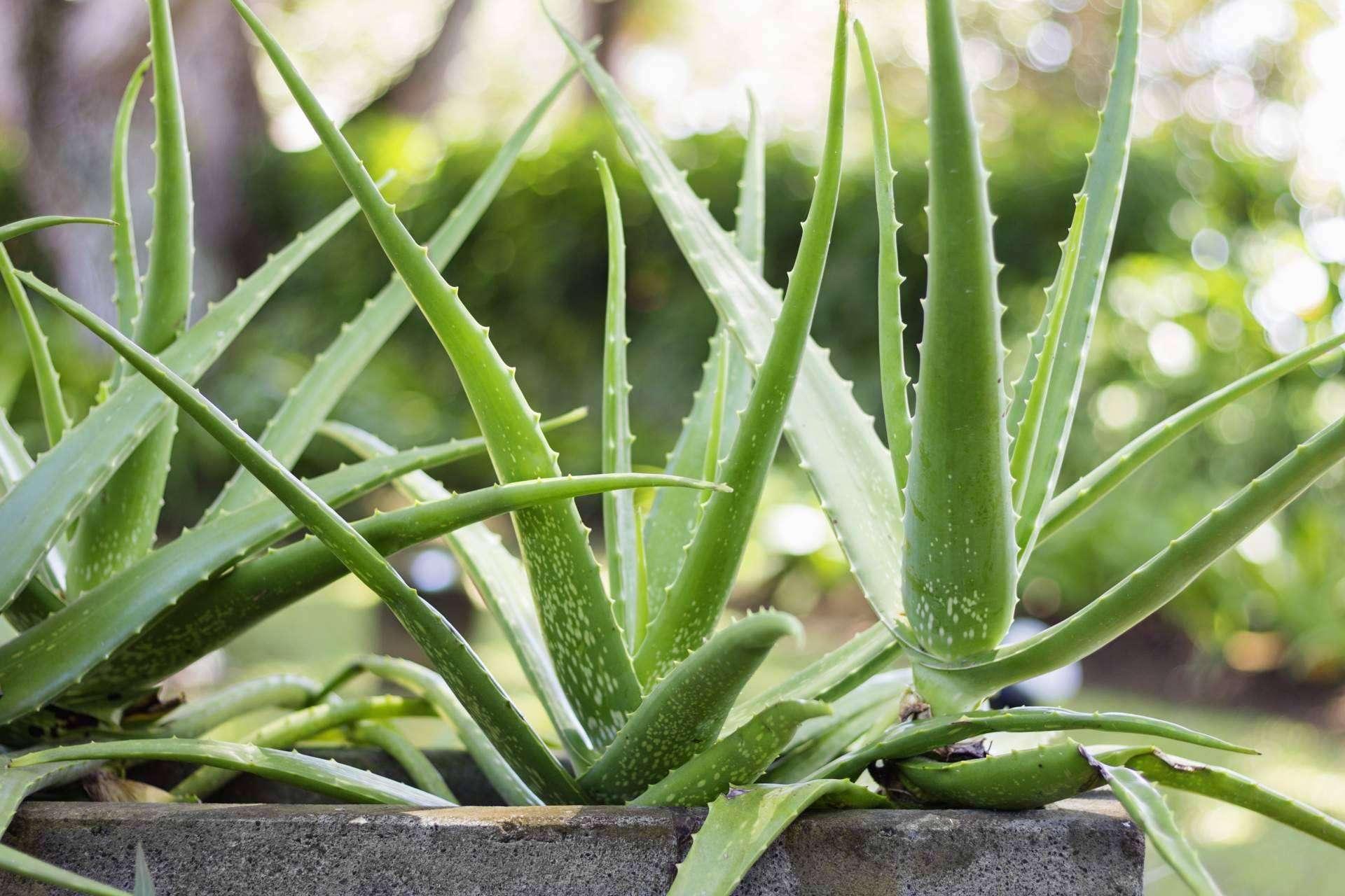 Trabajar online, uno de los beneficios de convertirse en distribuidor/a independiente de Territorio Aloe