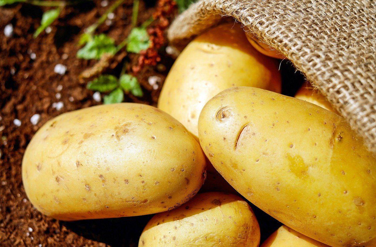 La patata, un alimento con innumerables beneficios, según Productos Monti