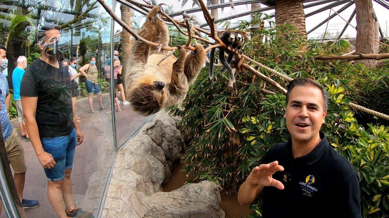 Loro Parque conmemora el Día del Perezoso con un vídeo de estos animales tan lentos como fascinantes