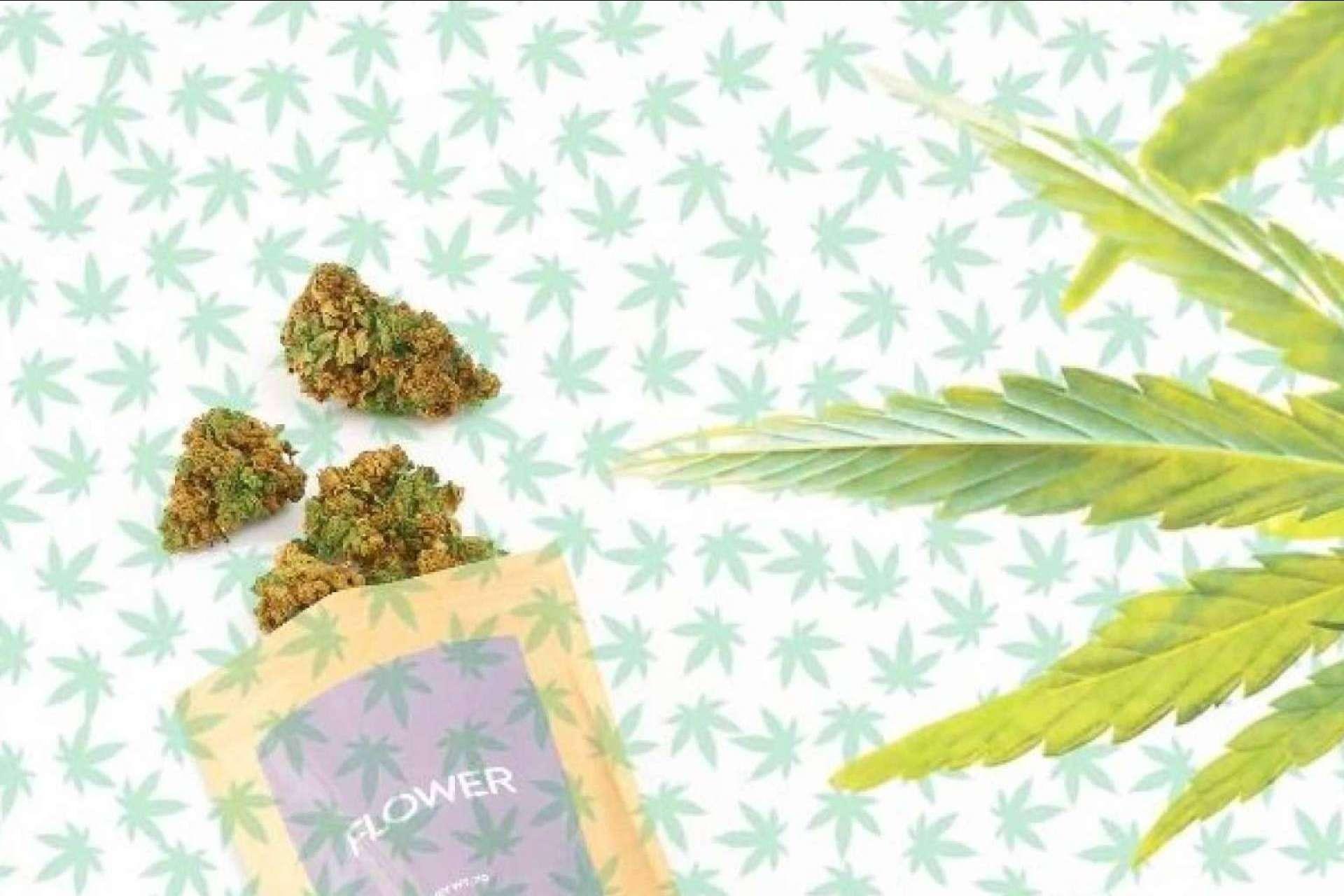 ¿Dónde comprar flores CBD online? CBD Organics